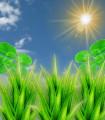 Trèfle vert et Aloès